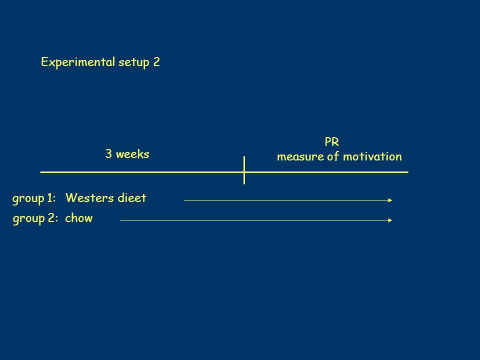 PR measure of motivation Westers dieet chow Experimental setup 2 3 weeks group 1: group 2: