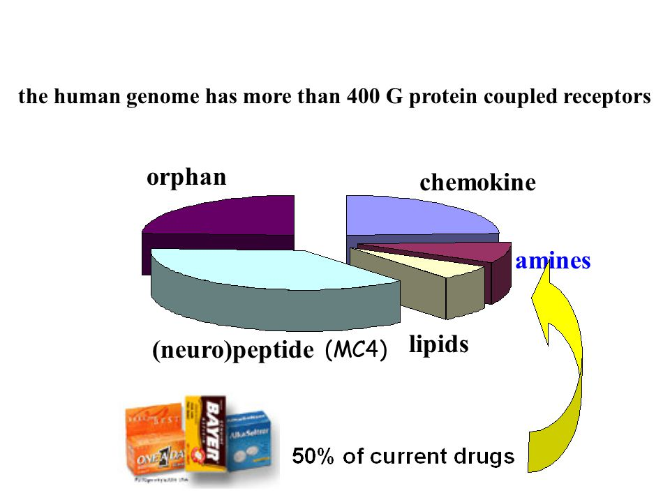 the human genome has more than 400 G protein coupled receptors (neuro)peptide chemokine lipids amines orphan (MC4)