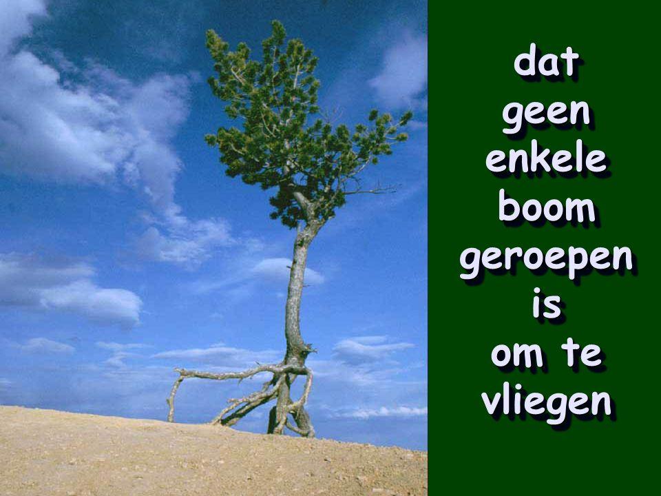 Dat wortels even belangrijk zijn als de vruchten om een boom gezond te noemen