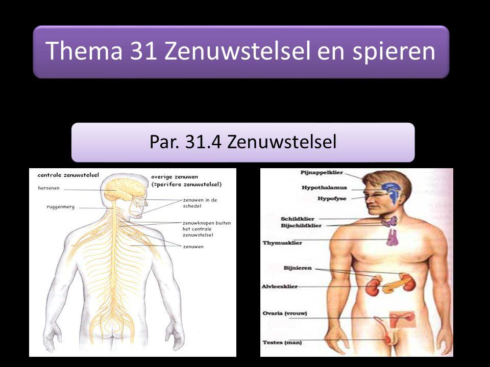 Thema 31 Zenuwstelsel en spieren Par. 31.4 Zenuwstelsel
