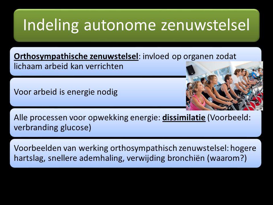 Indeling autonome zenuwstelsel Orthosympathische zenuwstelsel: invloed op organen zodat lichaam arbeid kan verrichten Voor arbeid is energie nodig All