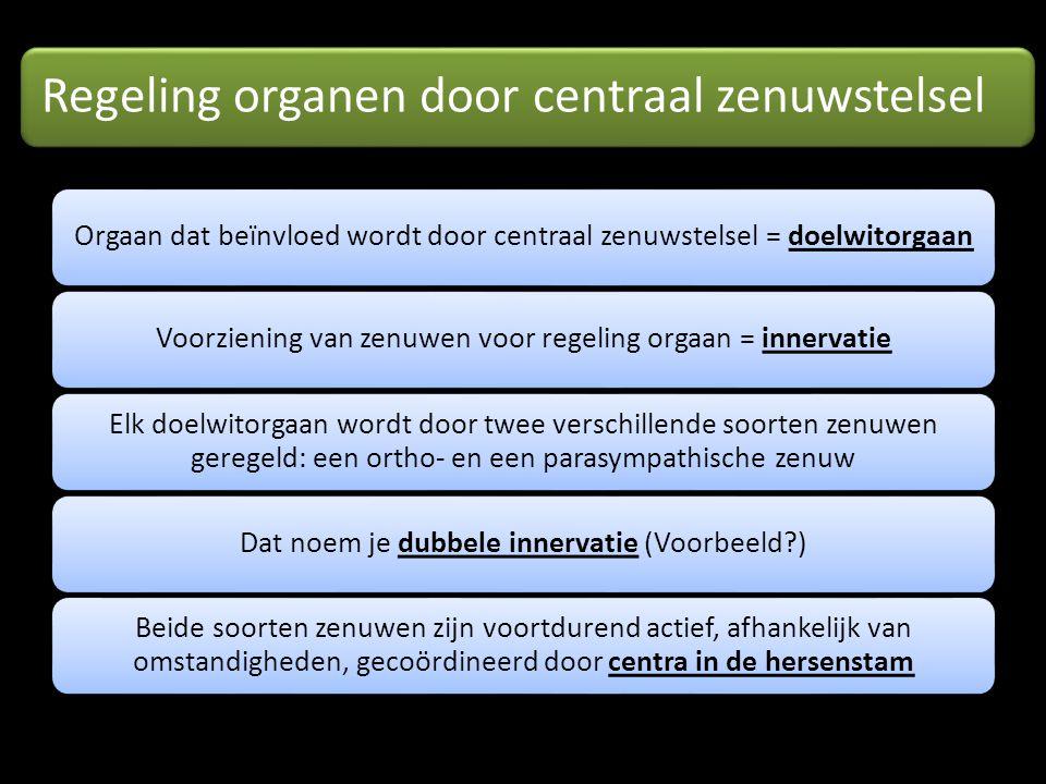 Regeling organen door centraal zenuwstelsel Orgaan dat beïnvloed wordt door centraal zenuwstelsel = doelwitorgaanVoorziening van zenuwen voor regeling