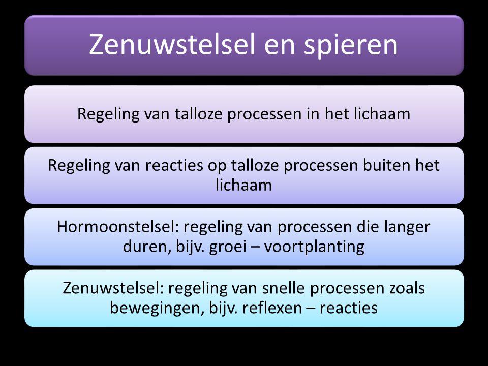 Zenuwstelsel en spieren Regeling van talloze processen in het lichaam Regeling van reacties op talloze processen buiten het lichaam Hormoonstelsel: re