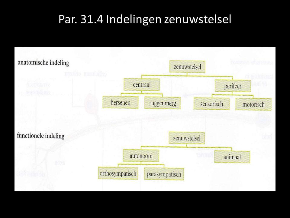 Par. 31.4 Indelingen zenuwstelsel