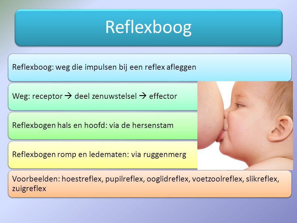 Reflexboog Reflexboog: weg die impulsen bij een reflex afleggenWeg: receptor  deel zenuwstelsel  effectorReflexbogen hals en hoofd: via de hersenstamReflexbogen romp en ledematen: via ruggenmerg Voorbeelden: hoestreflex, pupilreflex, ooglidreflex, voetzoolreflex, slikreflex, zuigreflex