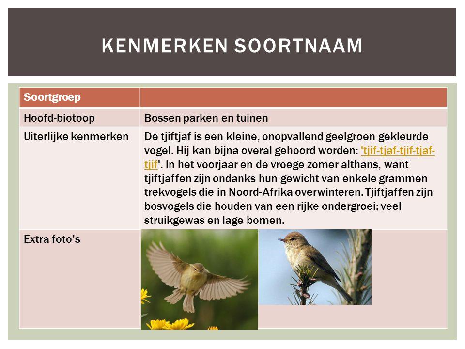 Soortgroep Hoofd-biotoopBossen parken en tuinen Uiterlijke kenmerkenDe tjiftjaf is een kleine, onopvallend geelgroen gekleurde vogel. Hij kan bijna ov