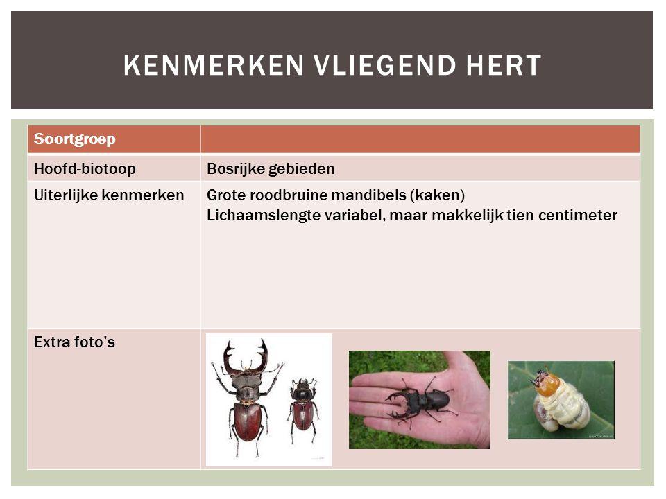 Soortgroep Hoofd-biotoopBosrijke gebieden Uiterlijke kenmerkenGrote roodbruine mandibels (kaken) Lichaamslengte variabel, maar makkelijk tien centimet