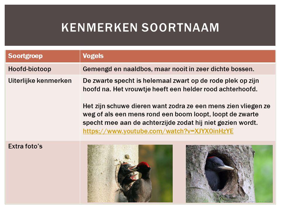 SoortgroepVogels Hoofd-biotoopGemengd en naaldbos, maar nooit in zeer dichte bossen. Uiterlijke kenmerkenDe zwarte specht is helemaal zwart op de rode