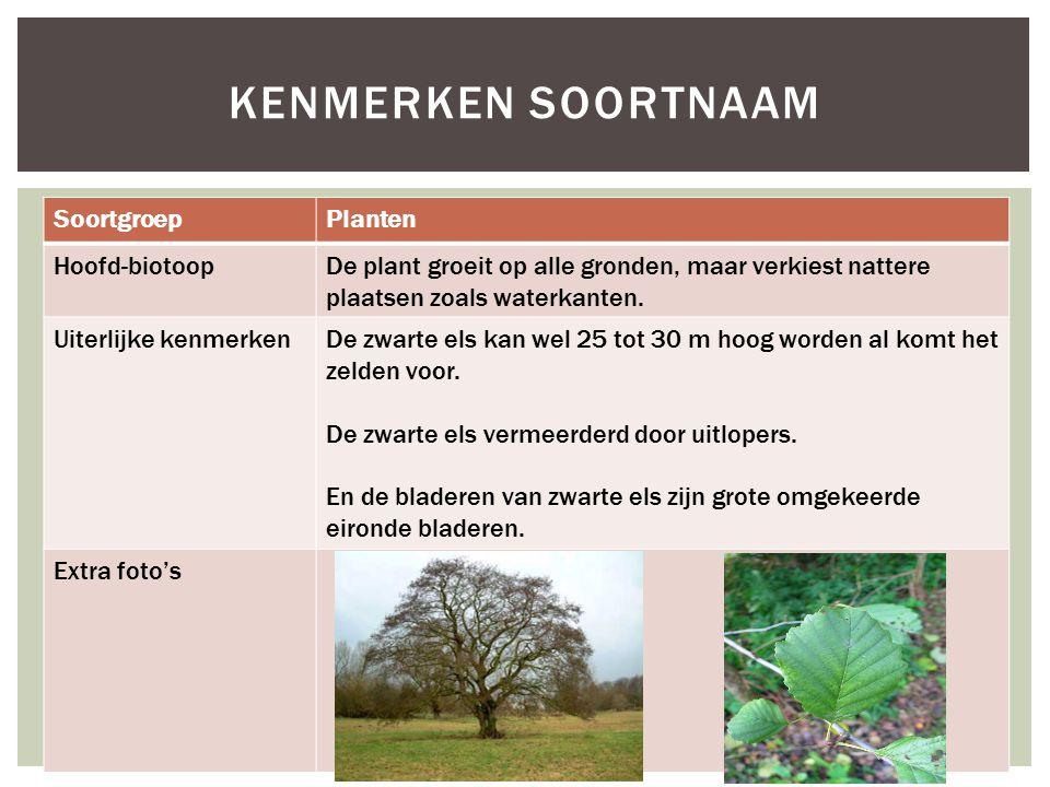 SoortgroepPlanten Hoofd-biotoopDe plant groeit op alle gronden, maar verkiest nattere plaatsen zoals waterkanten. Uiterlijke kenmerkenDe zwarte els ka