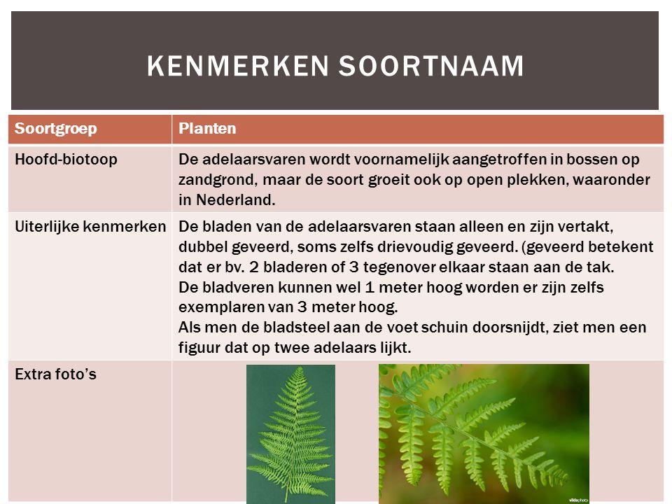 SoortgroepPlanten Hoofd-biotoopDe adelaarsvaren wordt voornamelijk aangetroffen in bossen op zandgrond, maar de soort groeit ook op open plekken, waar