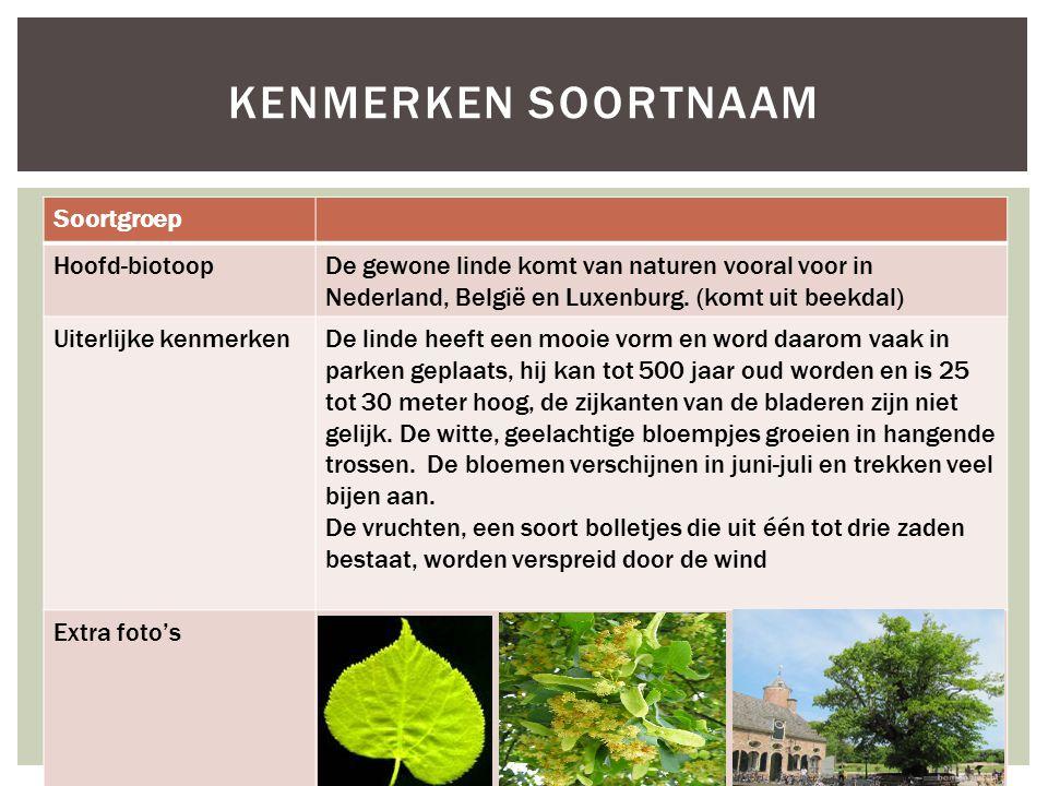 Soortgroep Hoofd-biotoopDe gewone linde komt van naturen vooral voor in Nederland, België en Luxenburg. (komt uit beekdal) Uiterlijke kenmerkenDe lind