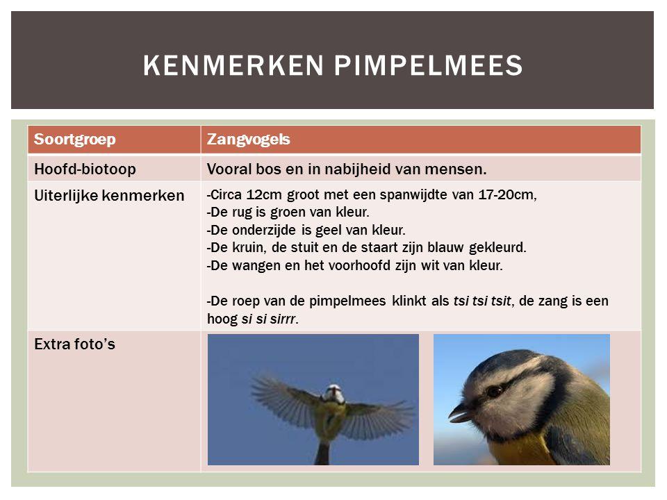 SoortgroepZangvogels Hoofd-biotoopVooral bos en in nabijheid van mensen. Uiterlijke kenmerken -Circa 12cm groot met een spanwijdte van 17-20cm, -De ru