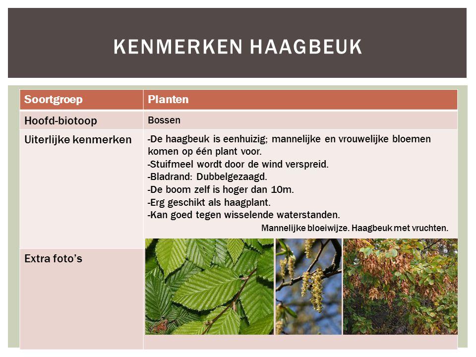 SoortgroepPlanten Hoofd-biotoop Bossen Uiterlijke kenmerken -De haagbeuk is eenhuizig; mannelijke en vrouwelijke bloemen komen op één plant voor. -Stu