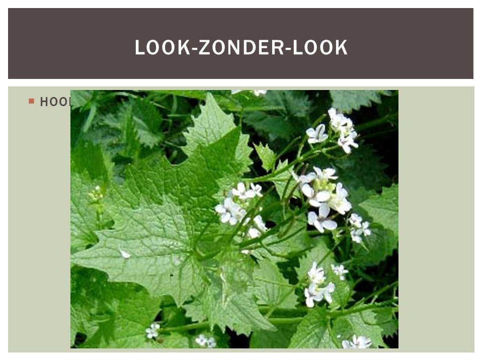 HOOFDFOTO LOOK-ZONDER-LOOK