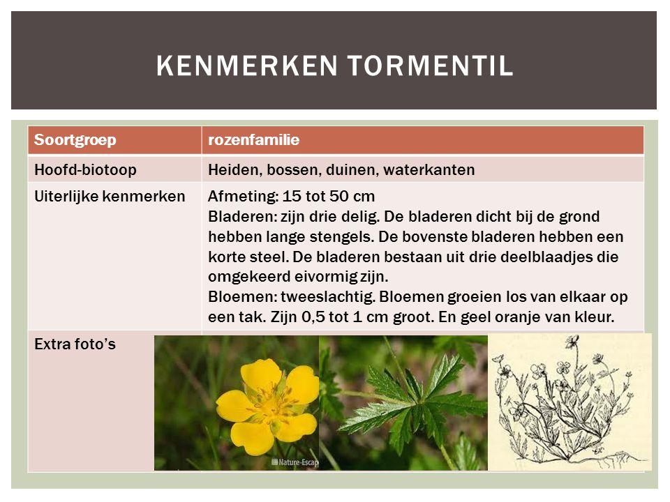 Soortgroeprozenfamilie Hoofd-biotoopHeiden, bossen, duinen, waterkanten Uiterlijke kenmerkenAfmeting: 15 tot 50 cm Bladeren: zijn drie delig. De blade