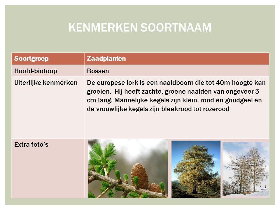 SoortgroepZaadplanten Hoofd-biotoopBossen Uiterlijke kenmerken De europese lork is een naaldboom die tot 40m hoogte kan groeien. Hij heeft zachte, gro
