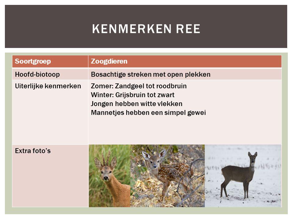 SoortgroepZoogdieren Hoofd-biotoopBosachtige streken met open plekken Uiterlijke kenmerkenZomer: Zandgeel tot roodbruin Winter: Grijsbruin tot zwart J