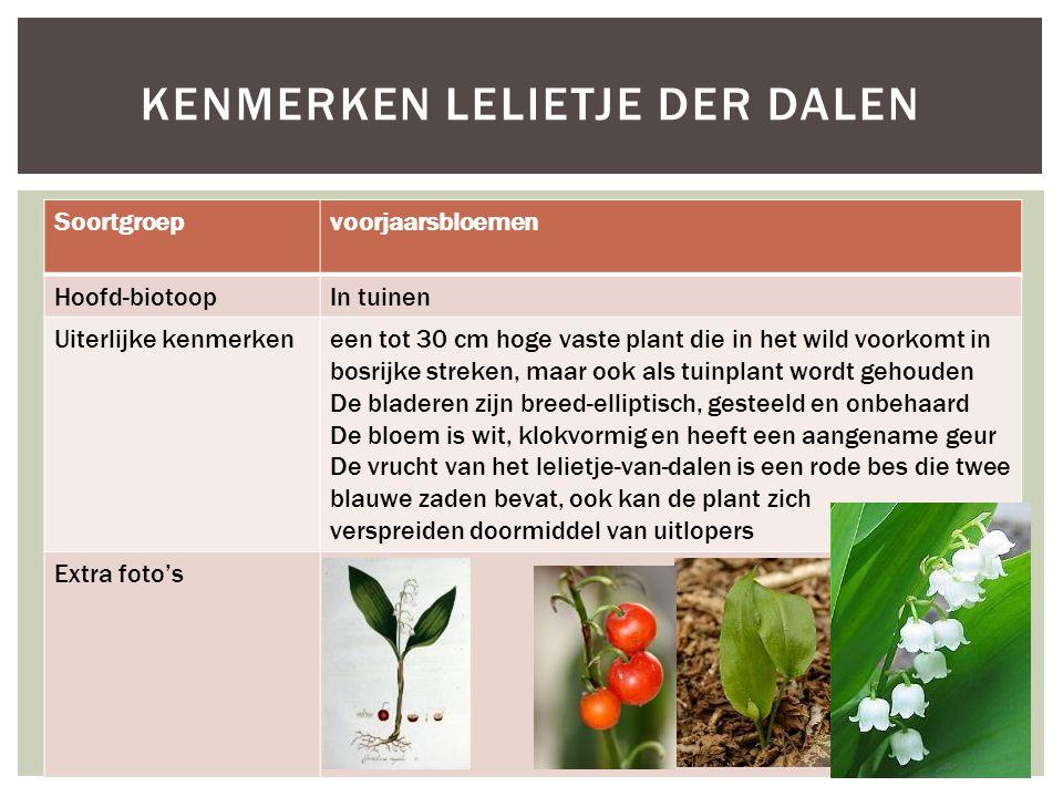 Soortgroepvoorjaarsbloemen Hoofd-biotoopIn tuinen Uiterlijke kenmerkeneen tot 30 cm hoge vaste plant die in het wild voorkomt in bosrijke streken, maa