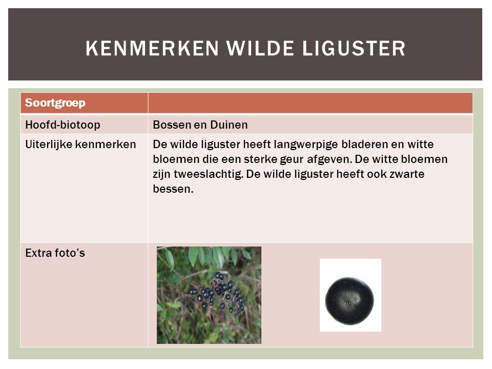 Soortgroep Hoofd-biotoopBossen en Duinen Uiterlijke kenmerkenDe wilde liguster heeft langwerpige bladeren en witte bloemen die een sterke geur afgeven