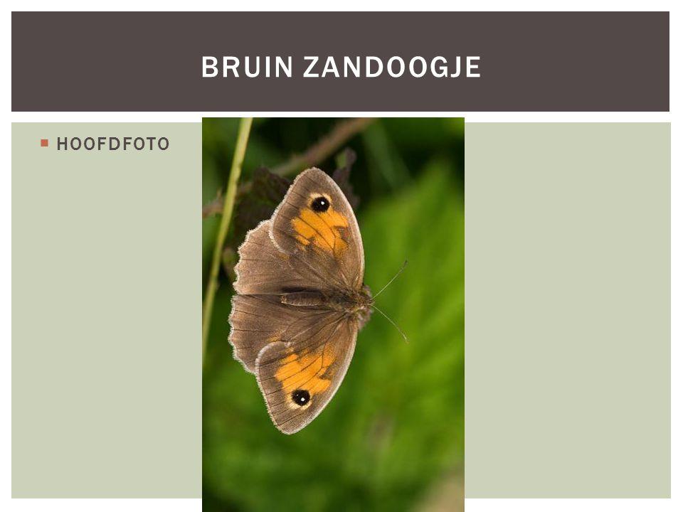  HOOFDFOTO BRUIN ZANDOOGJE