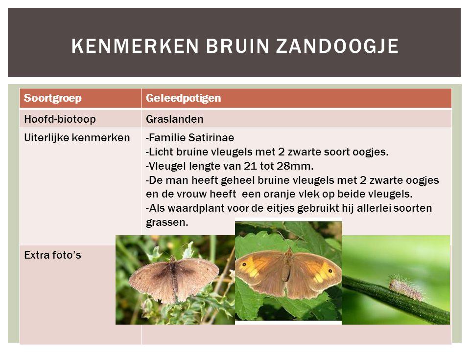 SoortgroepGeleedpotigen Hoofd-biotoopGraslanden Uiterlijke kenmerken-Familie Satirinae -Licht bruine vleugels met 2 zwarte soort oogjes. -Vleugel leng