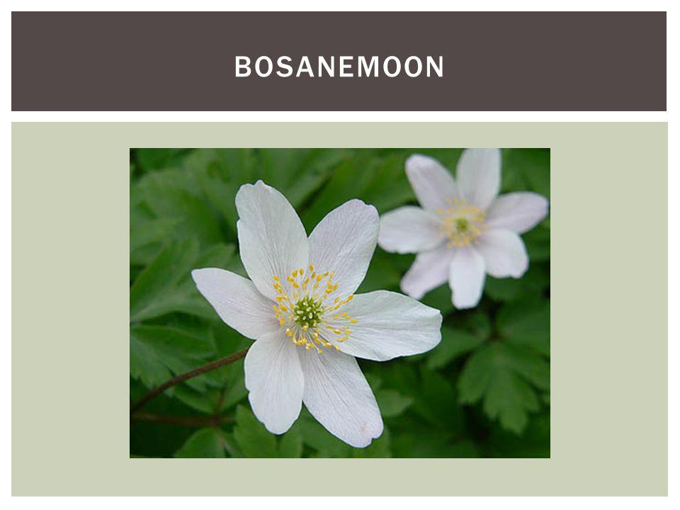 Soortgroep Hoofd-biotoopZowel op rijken en arme grond Uiterlijke kenmerkenDe kroon is breed en rondvormig.