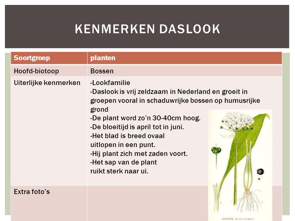 KENMERKEN DASLOOK Soortgroepplanten Hoofd-biotoopBossen Uiterlijke kenmerken-Lookfamilie -Daslook is vrij zeldzaam in Nederland en groeit in groepen v