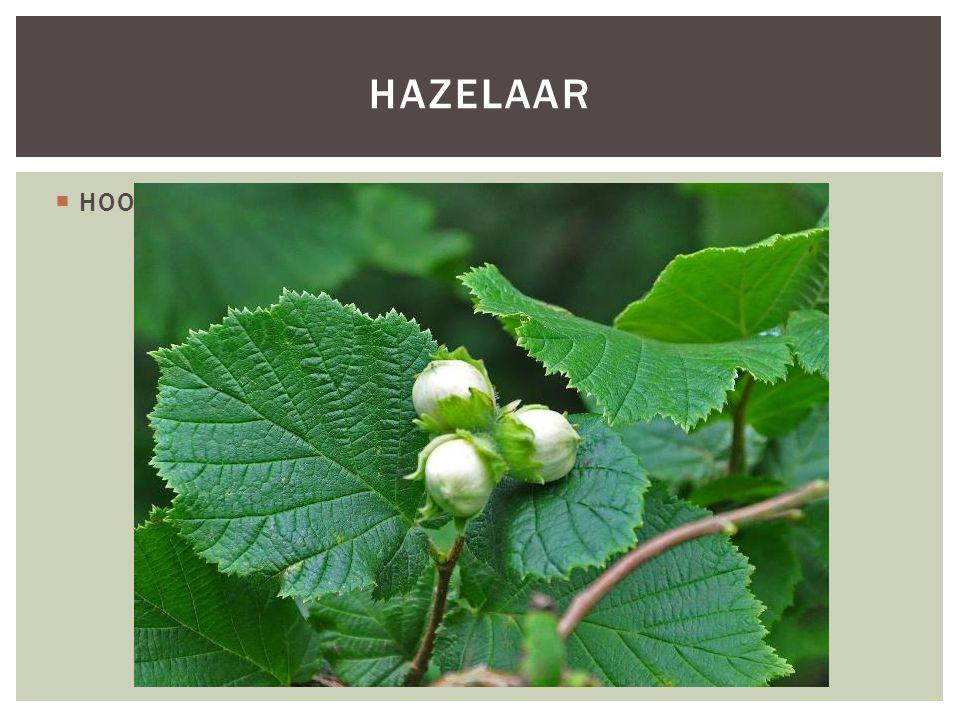  HOOFDFOTO HAZELAAR
