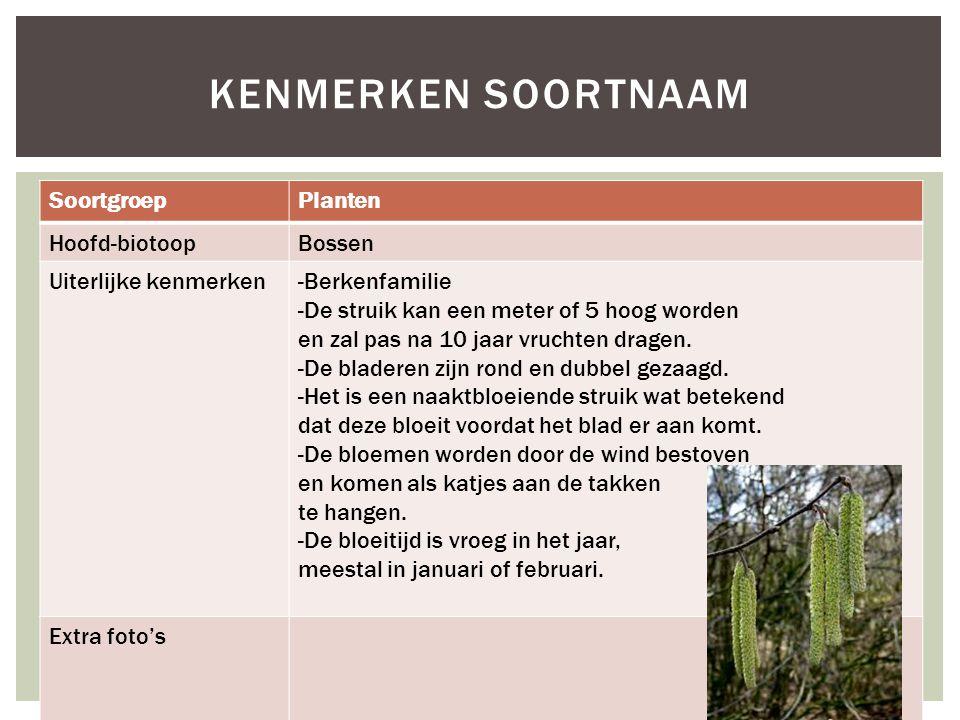SoortgroepPlanten Hoofd-biotoopBossen Uiterlijke kenmerken-Berkenfamilie -De struik kan een meter of 5 hoog worden en zal pas na 10 jaar vruchten drag