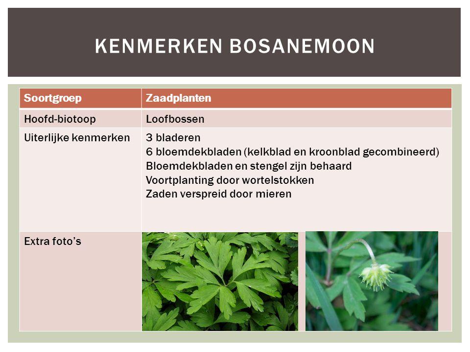 SoortgroepZaadplanten Hoofd-biotoopLoofbossen Uiterlijke kenmerken3 bladeren 6 bloemdekbladen (kelkblad en kroonblad gecombineerd) Bloemdekbladen en s