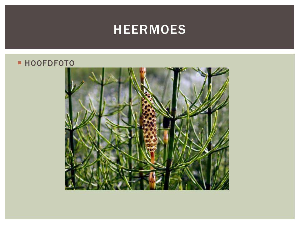  HOOFDFOTO HEERMOES