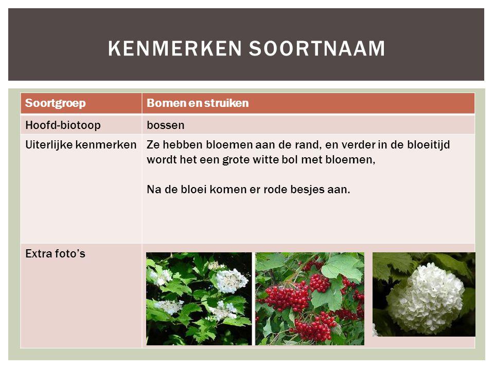 SoortgroepBomen en struiken Hoofd-biotoopbossen Uiterlijke kenmerkenZe hebben bloemen aan de rand, en verder in de bloeitijd wordt het een grote witte