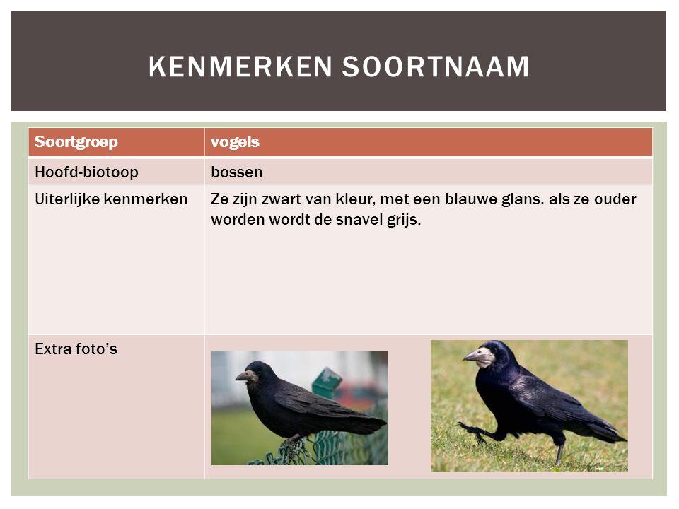 Soortgroepvogels Hoofd-biotoopbossen Uiterlijke kenmerkenZe zijn zwart van kleur, met een blauwe glans. als ze ouder worden wordt de snavel grijs. Ext
