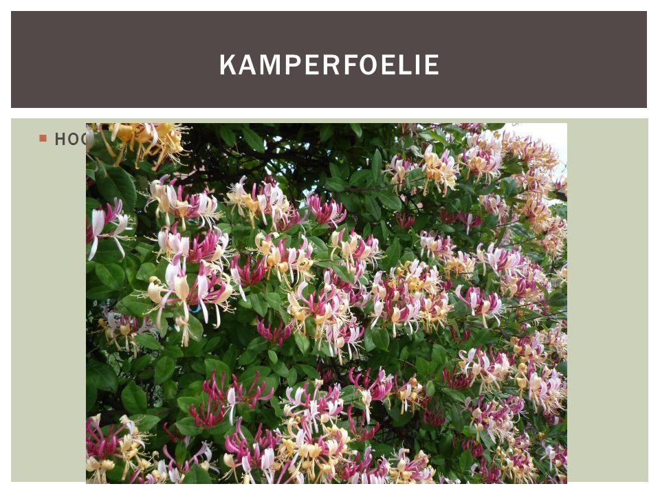 SoortgroepPlanten, (klimplanten) Hoofd-biotoop Bossen (openplekken in loofbossen) Uiterlijke kenmerkenDe schutbladen (een blad, direct onder een bloem) en kelken ( buitenste krans van bloembladeren )zijn klierachtig behaard, de eerste zijn hartvormig en scheiden de afzonderlijke kransen.