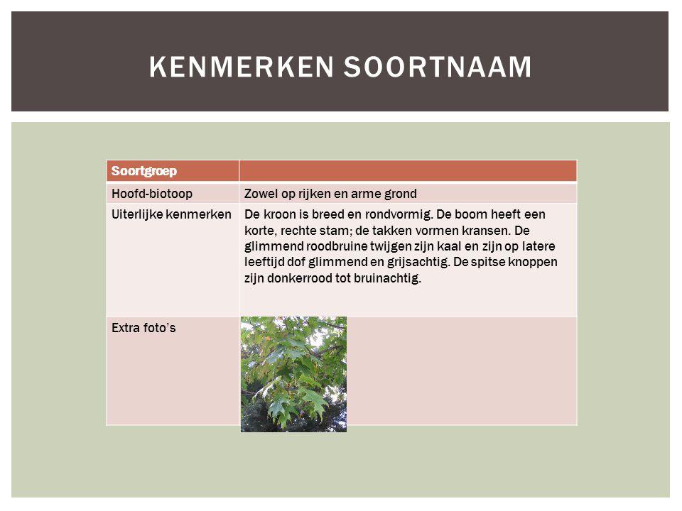Soortgroep Hoofd-biotoopZowel op rijken en arme grond Uiterlijke kenmerkenDe kroon is breed en rondvormig. De boom heeft een korte, rechte stam; de ta