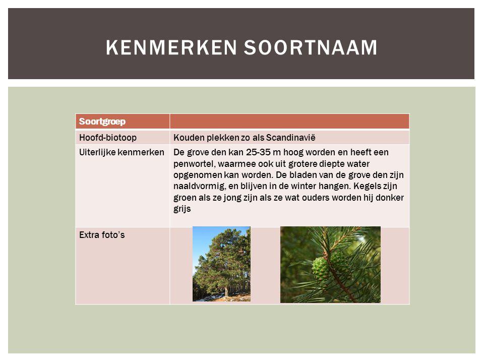 Soortgroep Hoofd-biotoopKouden plekken zo als Scandinavië Uiterlijke kenmerkenDe grove den kan 25-35 m hoog worden en heeft een penwortel, waarmee ook