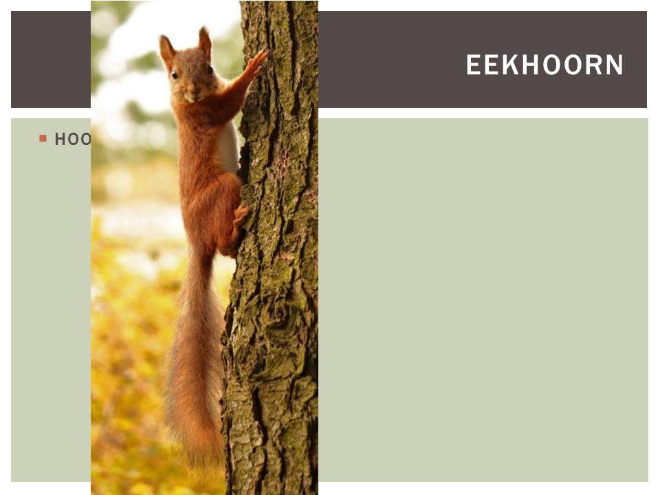  HOOFDFOTO EEKHOORN