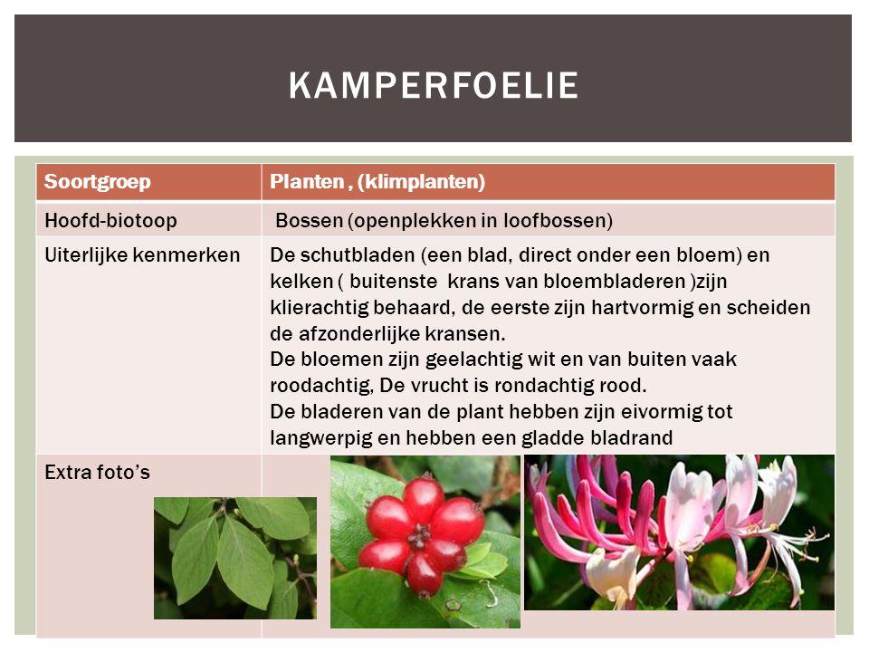 SoortgroepPlanten, (klimplanten) Hoofd-biotoop Bossen (openplekken in loofbossen) Uiterlijke kenmerkenDe schutbladen (een blad, direct onder een bloem