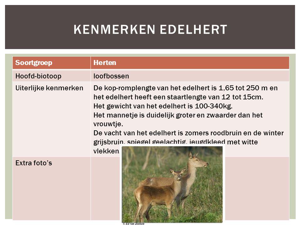 SoortgroepHerten Hoofd-biotooploofbossen Uiterlijke kenmerkenDe kop-romplengte van het edelhert is 1,65 tot 250 m en het edelhert heeft een staartleng
