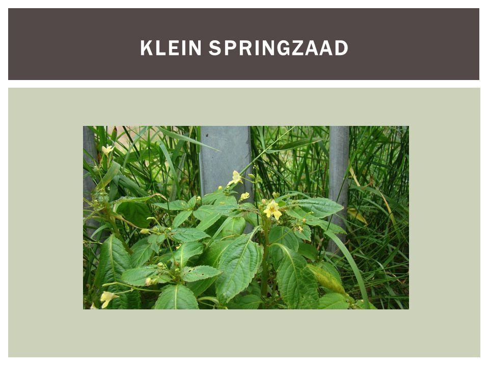 SoortgroepPlanten Hoofd-biotoopBoomgaarden en hagen Uiterlijke kenmerken-Komkommerfamilie -De plant komt voor op droge kalkrijke grond vaak in heggen boomgaarden of kreupelhout.