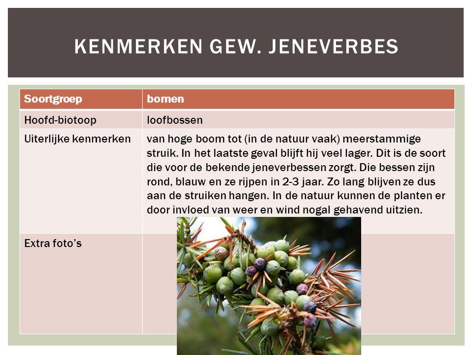 Soortgroepbomen Hoofd-biotooploofbossen Uiterlijke kenmerkenvan hoge boom tot (in de natuur vaak) meerstammige struik. In het laatste geval blijft hij