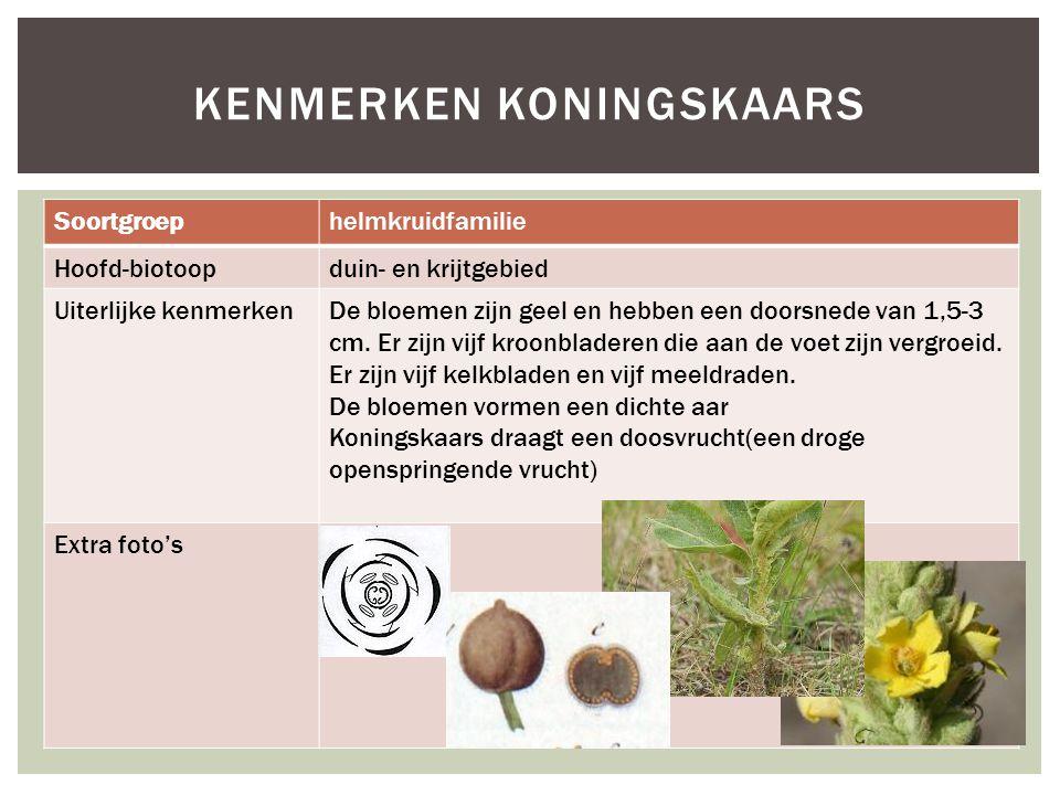Soortgroephelmkruidfamilie Hoofd-biotoopduin- en krijtgebied Uiterlijke kenmerkenDe bloemen zijn geel en hebben een doorsnede van 1,5-3 cm. Er zijn vi