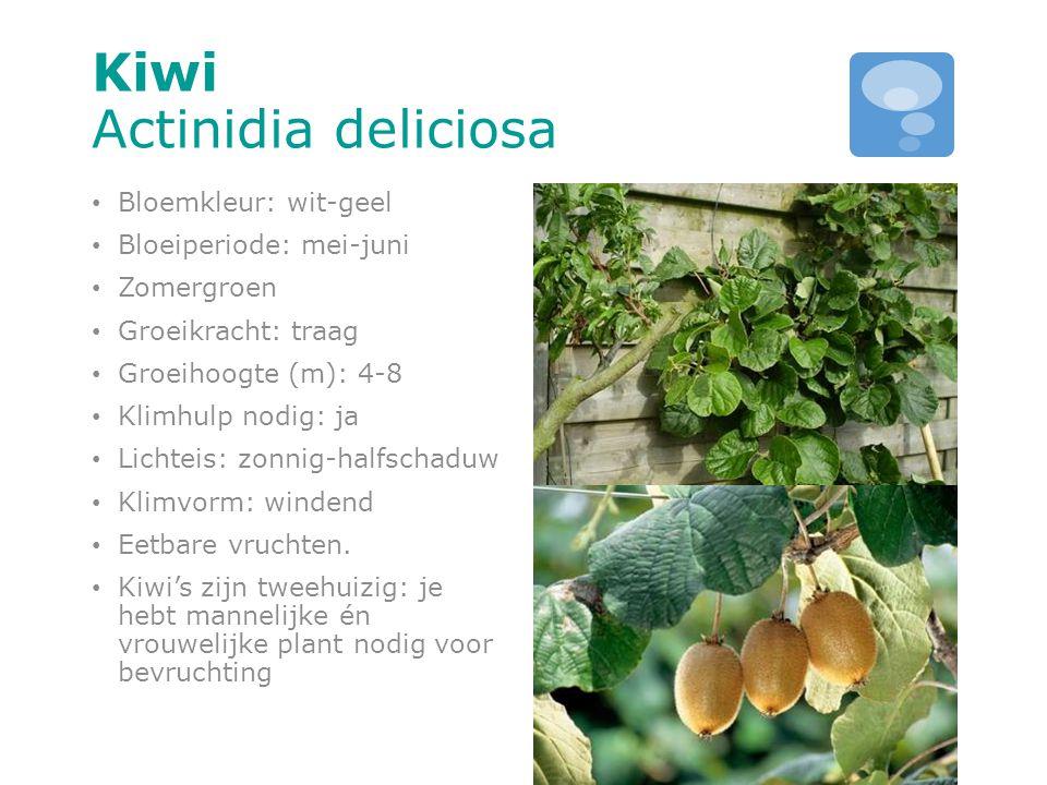 Kiwi Actinidia deliciosa Bloemkleur: wit-geel Bloeiperiode: mei-juni Zomergroen Groeikracht: traag Groeihoogte (m): 4-8 Klimhulp nodig: ja Lichteis: z