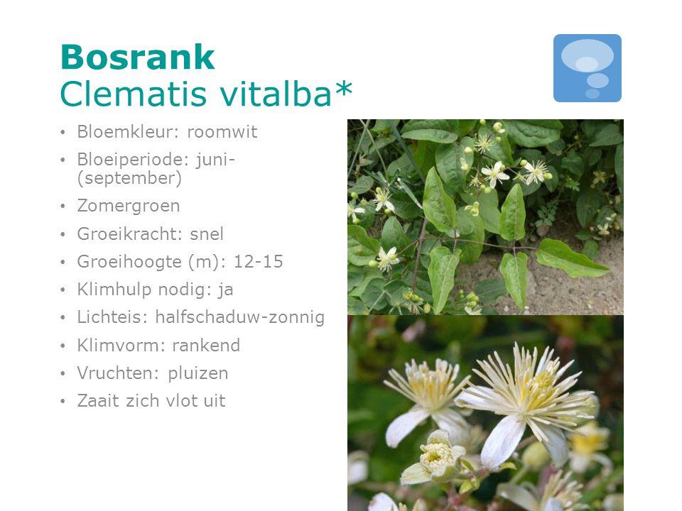 Bosrank Clematis vitalba* Bloemkleur: roomwit Bloeiperiode: juni- (september) Zomergroen Groeikracht: snel Groeihoogte (m): 12-15 Klimhulp nodig: ja L