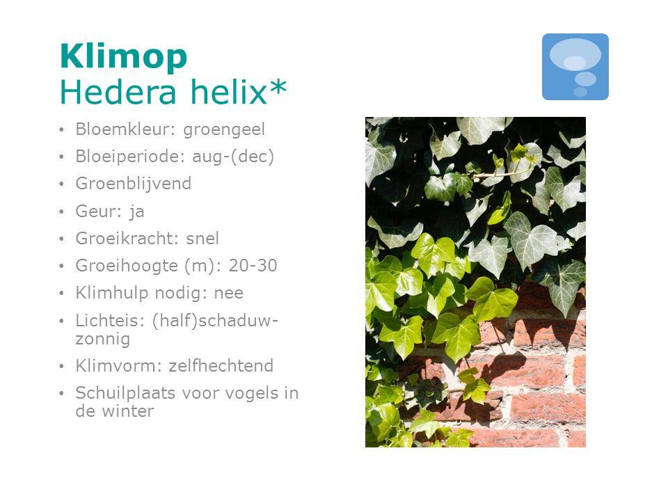 Klimop Hedera helix* Bloemkleur: groengeel Bloeiperiode: aug-(dec) Groenblijvend Geur: ja Groeikracht: snel Groeihoogte (m): 20-30 Klimhulp nodig: nee