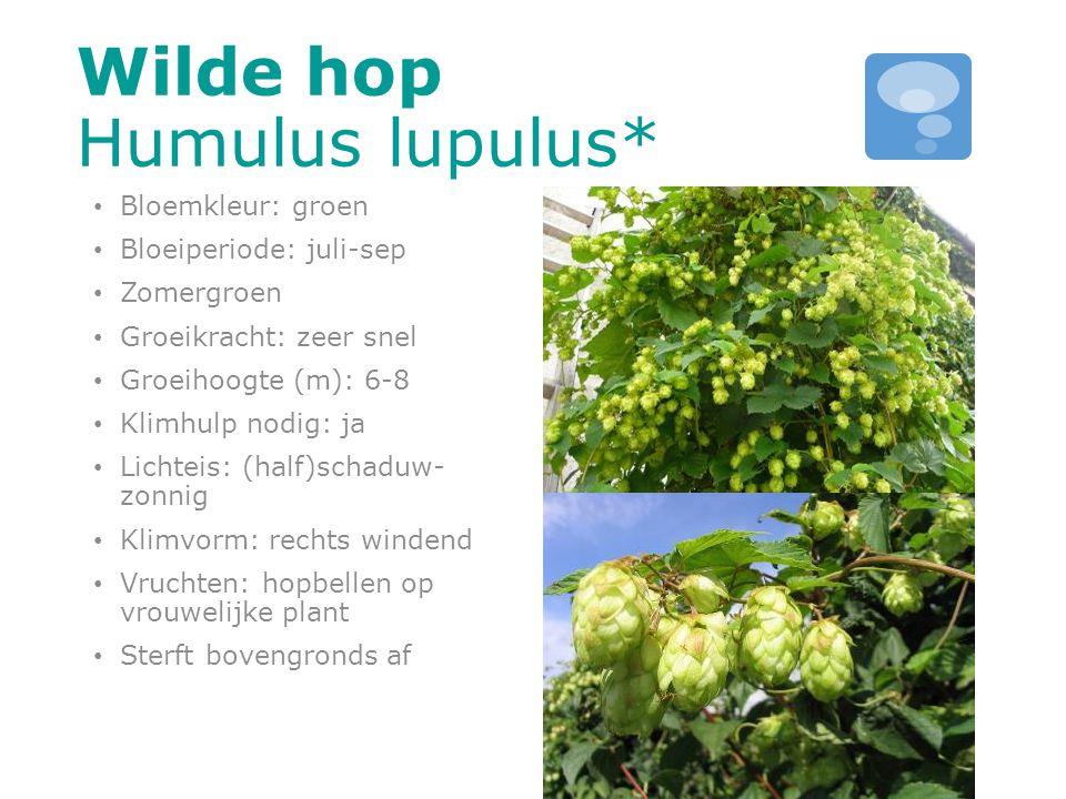 Wilde hop Humulus lupulus* Bloemkleur: groen Bloeiperiode: juli-sep Zomergroen Groeikracht: zeer snel Groeihoogte (m): 6-8 Klimhulp nodig: ja Lichteis