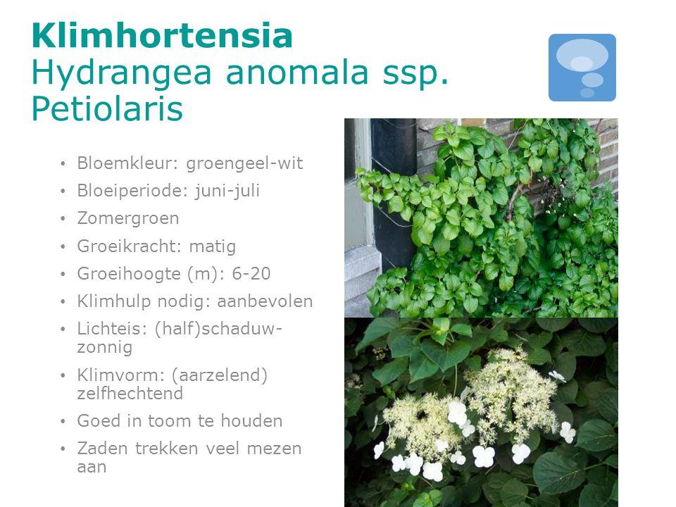 Klimhortensia Hydrangea anomala ssp. Petiolaris Bloemkleur: groengeel-wit Bloeiperiode: juni-juli Zomergroen Groeikracht: matig Groeihoogte (m): 6-20