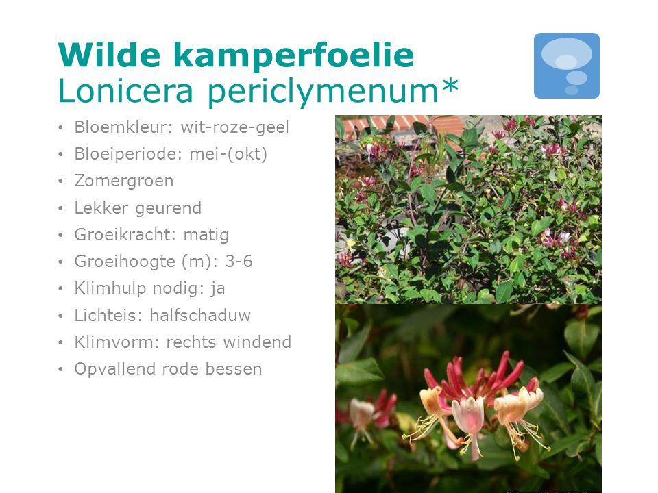 Wilde kamperfoelie Lonicera periclymenum* Bloemkleur: wit-roze-geel Bloeiperiode: mei-(okt) Zomergroen Lekker geurend Groeikracht: matig Groeihoogte (