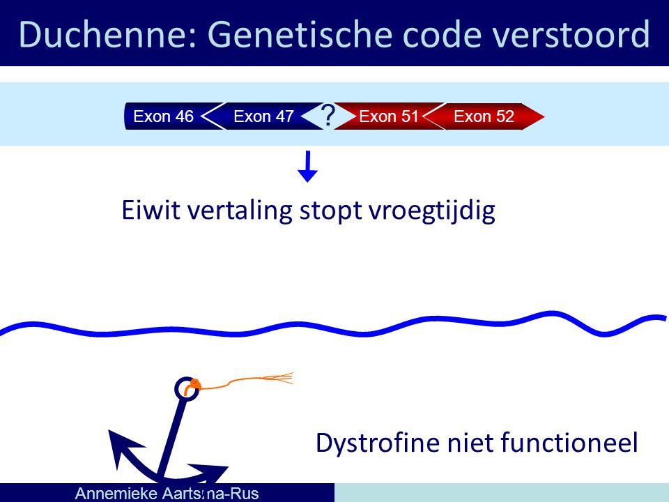 Duchenne: Genetische code verstoord Annemieke Aartsma-Rus Eiwit vertaling stopt vroegtijdig Dystrofine niet functioneel Exon 46Exon 47Exon 51 Exon 52 ?