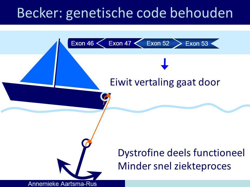 Becker: genetische code behouden Annemieke Aartsma-Rus Eiwit vertaling gaat door Dystrofine deels functioneel Minder snel ziekteproces Exon 46Exon 47 Exon 52 Exon 53